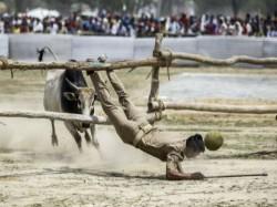 Akhilesh Yadav Tells If Stray Bulls Injured Anyone Then File Case Against Yogi Adityanath