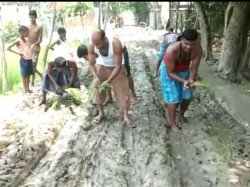 People Cultivated Crops On Road For Protest In Cooch Behar