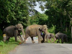 Men Killed By Elephant In West Midnapore One Elephant Cub Found Dead Also