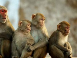 Conflict Over Water Kills About 15 Monkeys In Madhyapradesh