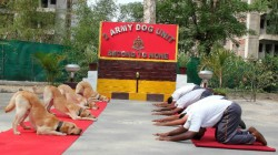 Yoga Day Dog Squad Of Border Security Force Performs Yoga Videos