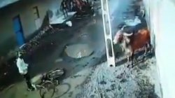 Bull Goes On Rampage In Gujarat S Rajkot Street See Video
