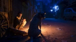 As Many As 50 Dogs Were Poisoned In Telangana