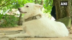 Dog Was Abandoned By Its Owner For Having An Illicit Relationship With A Dog Next Door