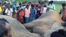 Elecphant Electricuted At Jhargram