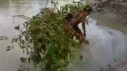 Sunderban S Whoa Looted Illegally By Poachers Govt Silent Spectator
