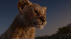 The Lion King S Model Cub Gone Viral With This Cute Video