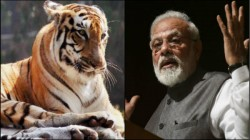 Pm Modi Releases Tiger Census Whcich Shows India Achives Target 4 Years Early