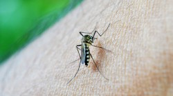 Two Women Died In Dengue Fever In Gaighata