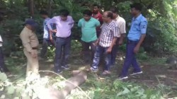 Elephant S Death By Electric Shock In West Bengal
