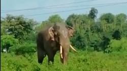 Wild Elephant Ruckus In Alipurduar Forest Rangers In Trouble