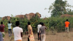 Elephant Died Myteriously In Garbeta Jungle