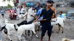 Goat Sale For Whopping Rs 8 Lakh In Gorakhpur Market