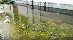 Dengu Threat At Danyakuria Hospital For Water Logging