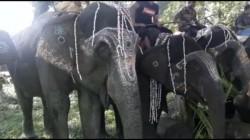 Elephant Worship At Jaldapara On Viswakarma Puja