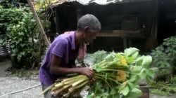Tea Garden Workers Eating Only Leaves In Kalchini