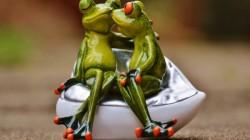 Frogs Were Divorced For Heavy Rain In Bhopal