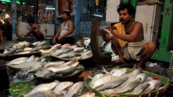 Hilsa Or Ilish Fish Caught By Fisherman At Digha