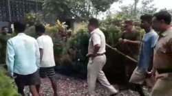 Jalpaiguri Forest Officials Arrested 3 Wildlife Traffiker