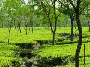 (ছবি) উত্তরবঙ্গের ডুয়ার্সে ঘুরে তরতাজা হয়ে ফিরুন কয়েকদিনেই