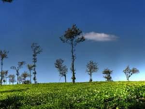 (ছবি)বিদেশ ভ্রমণের আগে ভারতের এই জায়গাগুলি অবশ্যই ঘুরে দেখুন