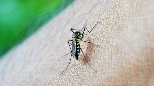 Dengue Outbreaks Spread Throughout Southern Kolkata After The Monsoon Departure