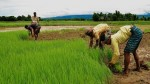 Bangladeshi Scientist Invented Machin Protect Crop From Insects