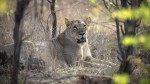 Teenager Dies At Toilet Killed Lion