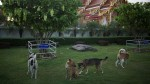 Due Rabies Thailand 1 Million Dogs Cats Vaccinated