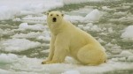 The State Emergency Issued Russian Island Over White Bear