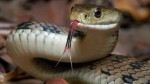 Indonesian Police Put Snake To Intimidate Prisoner