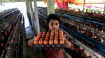 Egg Price To Increase