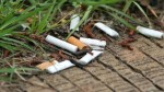 Cigarette Butts Are Impeding The Growth Of Plants